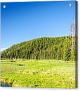 Meadow And Forest Acrylic Print