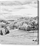 Meadow Bw Acrylic Print by Chuck Kuhn