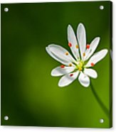 Meadow Candy - Featured 3 Acrylic Print