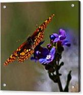 Meadow Color Acrylic Print