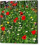 Meadow Flowers - Digital Oil Acrylic Print