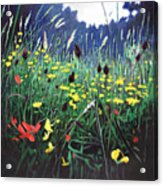 Meadow Glory Acrylic Print