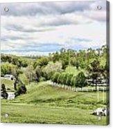 Meadow II Acrylic Print