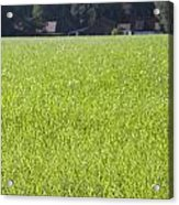 Meadow In City Park Boschveld Arnhem Netherlands Acrylic Print