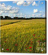 Meadow Of Poppies Acrylic Print