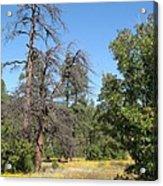 Meadow Over Oak Creek Canyon  Acrylic Print