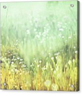 Meadowland Acrylic Print by Amy Tyler