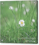 Meadows Of Heaven Acrylic Print