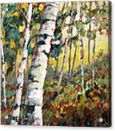 Meandering Woods Acrylic Print