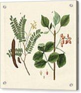 Medicinal Plants Acrylic Print