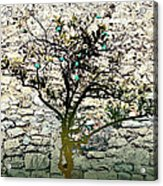 Mediterranean Garden With An Old Wall Acrylic Print by Arsenije Jovanovic