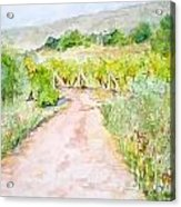 Medjugorje Path To Apparition Hill Acrylic Print