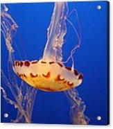 Medusa Jelly Acrylic Print