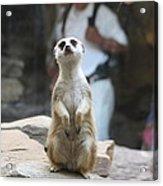 Meerket - National Zoo - 01132 Acrylic Print by DC Photographer