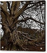 Meet Me At The Tree Acrylic Print