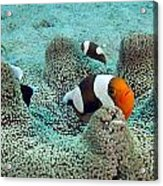 Meet The Nemo Family Acrylic Print