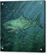 Megadolon Shark Acrylic Print