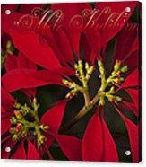 Mele Kalikimaka - Poinsettia  - Euphorbia Pulcherrima Acrylic Print