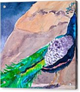 Mellow Peacock Acrylic Print