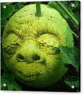 Melon Head Acrylic Print by Jack Zulli