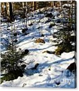 Melting Snow In A Forest In Late Winter Acrylic Print