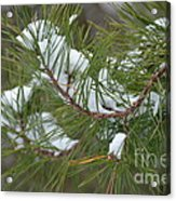 Melting Snow In The Pines Acrylic Print