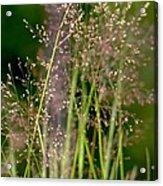 Memories Of Springtime Acrylic Print