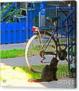 Meow Cat In Verdun Waiting By The Step Beautiful Summer Montreal Pet Lovers City Scene C Spandau Acrylic Print