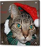 Meowy Christmas Acrylic Print