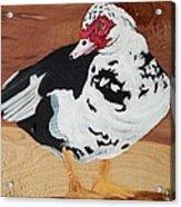 Merganser Duck Painted On Cedar Acrylic Print