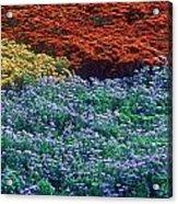 Merging Colors Acrylic Print