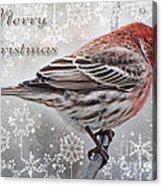 Merry Christman Finch Greeting Card Acrylic Print
