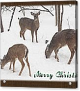 Merry Christmas Card - Whitetail Deer In Snow Acrylic Print