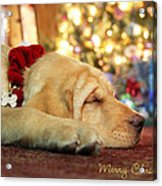 Merry Christmas From Lily Acrylic Print