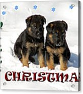 Merry Christmas Puppies Acrylic Print