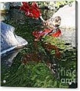 Merry Koi Acrylic Print