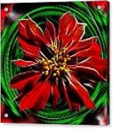 Merry Xtmas - Poinsettia Acrylic Print