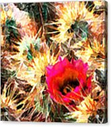 Mesh Of Cactus Needles Acrylic Print