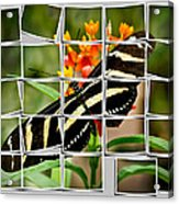 Messed Up Butterfly Acrylic Print by Jean Noren