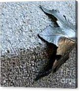 Metal Leaf Acrylic Print