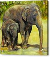 Thirsty, Methai And Baylor, Elephants  Acrylic Print