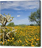 Mexican Golden Poppy Flowers And Cactus Acrylic Print
