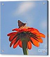 Mexican Sunflower Hat Dance Acrylic Print