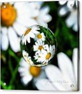 #mgmarts #daisy #flower #weed #summer Acrylic Print