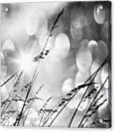 #mgmarts #grass #weed #wind #field Acrylic Print