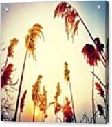 #mgmarts #sunset #bright #beautiful Acrylic Print