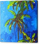 Miami Beach Palm Trees In A Blue Sky Acrylic Print by Patricia Awapara