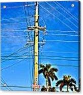 Miami Key West Acrylic Print