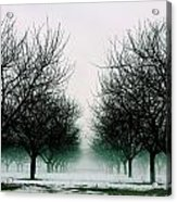 Michigan Cherry Trees In Winter Acrylic Print