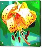 Michigan Lily Acrylic Print